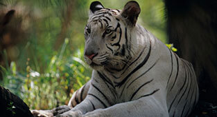 Nandan Kanan Biological Park